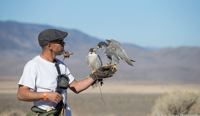 Falconer with two falcons on the fist