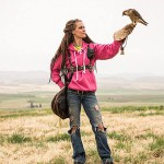 Releasing Barbary Falcon